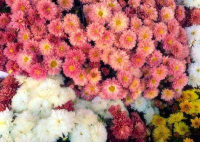 Flower Photography AkiStepinska 009