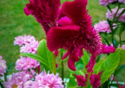 Flower Photography AkiStepinska 011