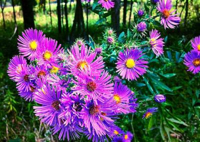 Flower Photography AkiStepinska 030