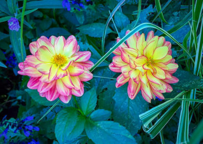 Flower Photography AkiStepinska 036