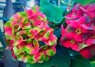 Flower Photography AkiStepinska 045 min
