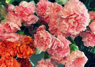 Flower Photography AkiStepinska 052 min