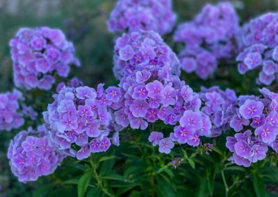 Flower Photography AkiStepinska 081 min